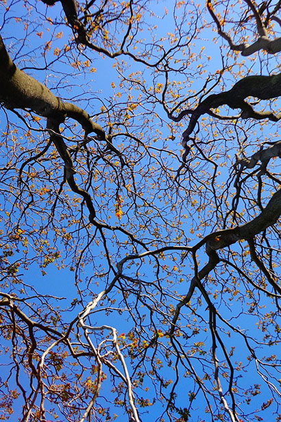 tree-439171_1280